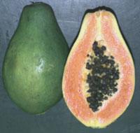 PAPAYA Papaya2