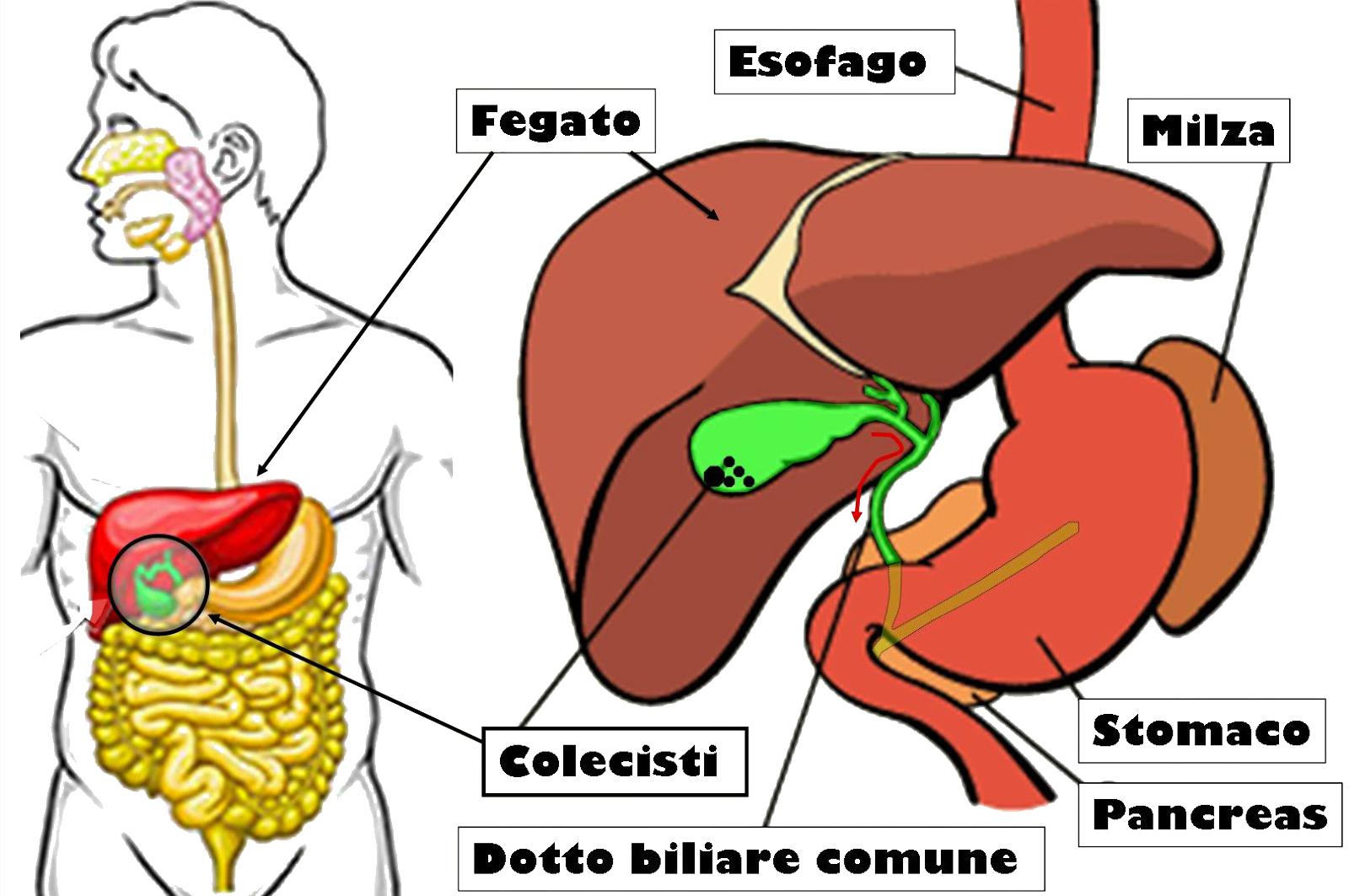 dieta per prevenire il funzionamento della cistifellea